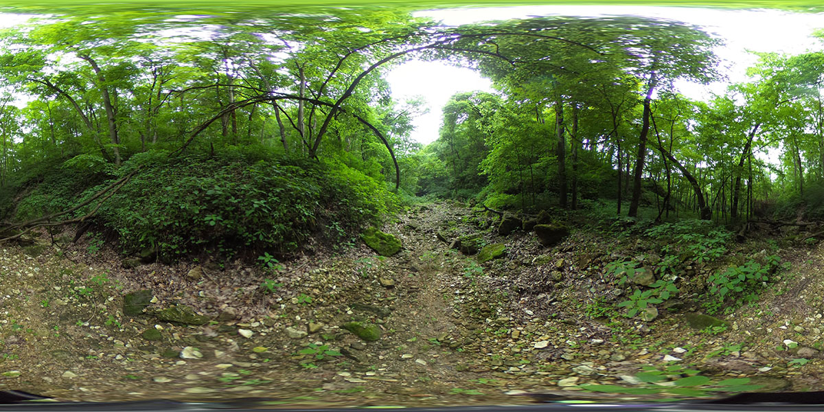 20170623: Stereoscopic Shots from Wyalusing Hardwood Forest SNA